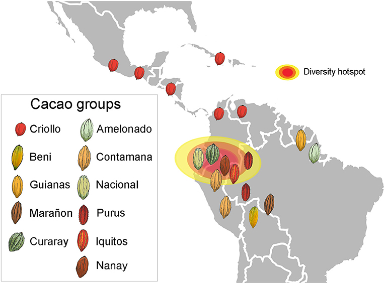 Figure 1 - Geographical distribution of cacao groups differing in their genes and morphological features.