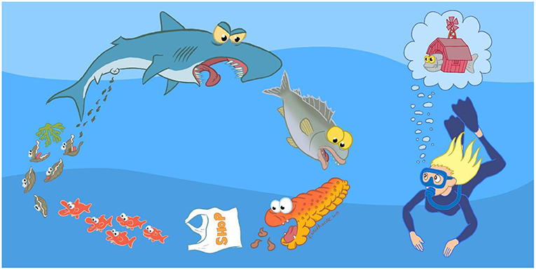Figure 1 - This comic shows the natural food chain, with a combination of complementary species: carnivorous and omnivorous fishes, sea cucumber as a detritivorous species, algae that consume nutrients present in water, and filter feeders (such as mussels) that feed on small organic particles.