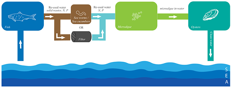Figure 2 - Diagram of the connections between the tanks in an experimental integrated multi-trophic aquaculture system.