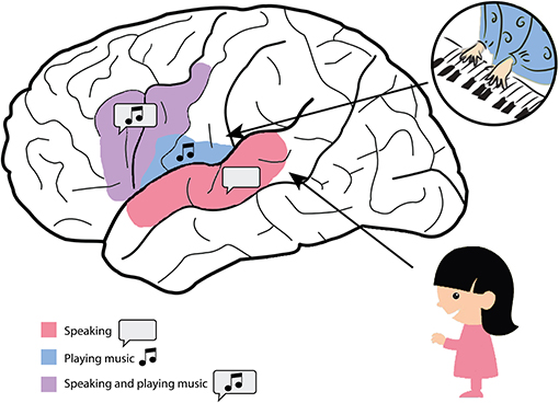Figure 3 - Some regions of the brain mostly process speech and some regions mostly process music.