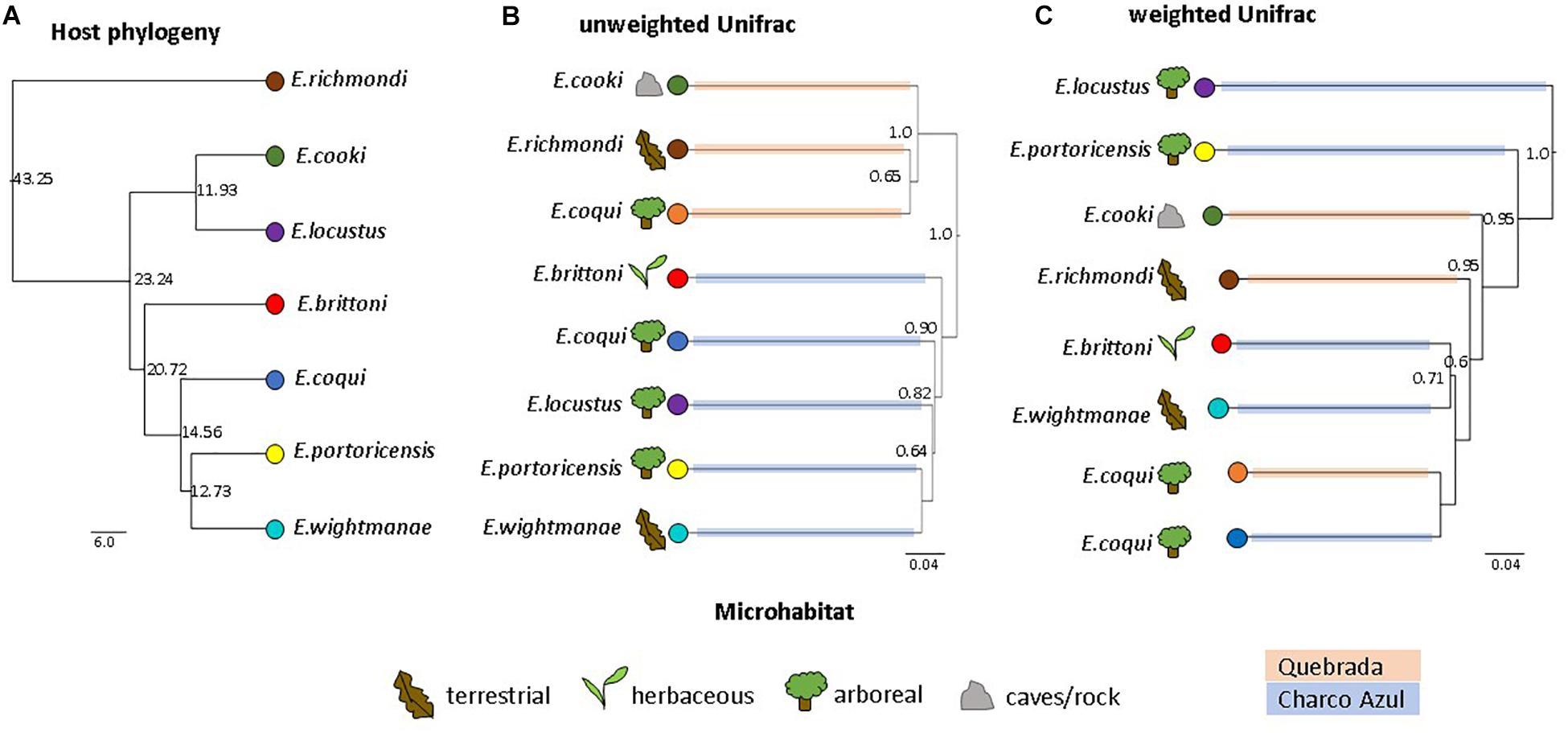 Frontiers | The Skin Microbiota of Eleutherodactylus Frogs