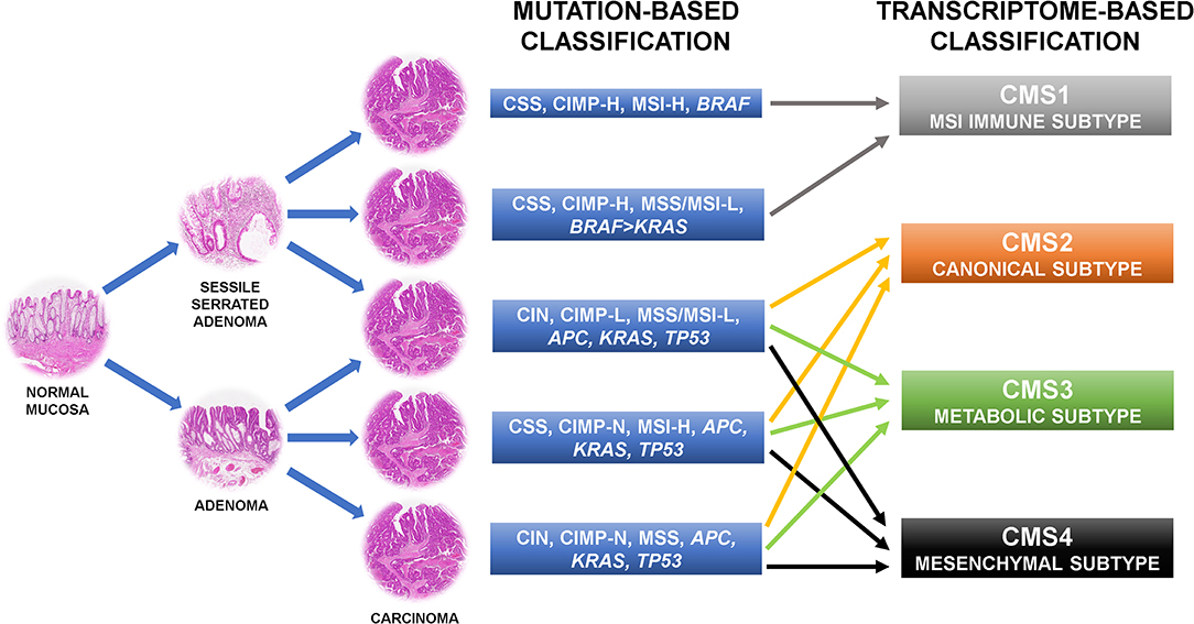 Frontiers Ras Cellular Plasticity And Tumor Budding In Colorectal Cancer Oncology
