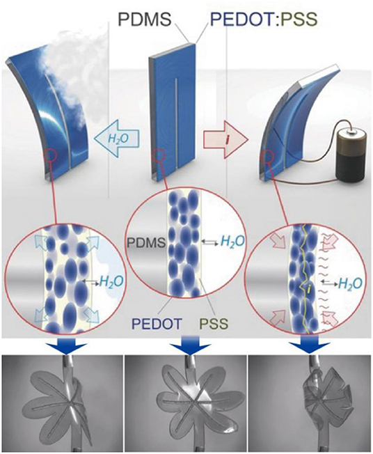 「PEDOT-based conducting polymer actuators」の画像検索結果