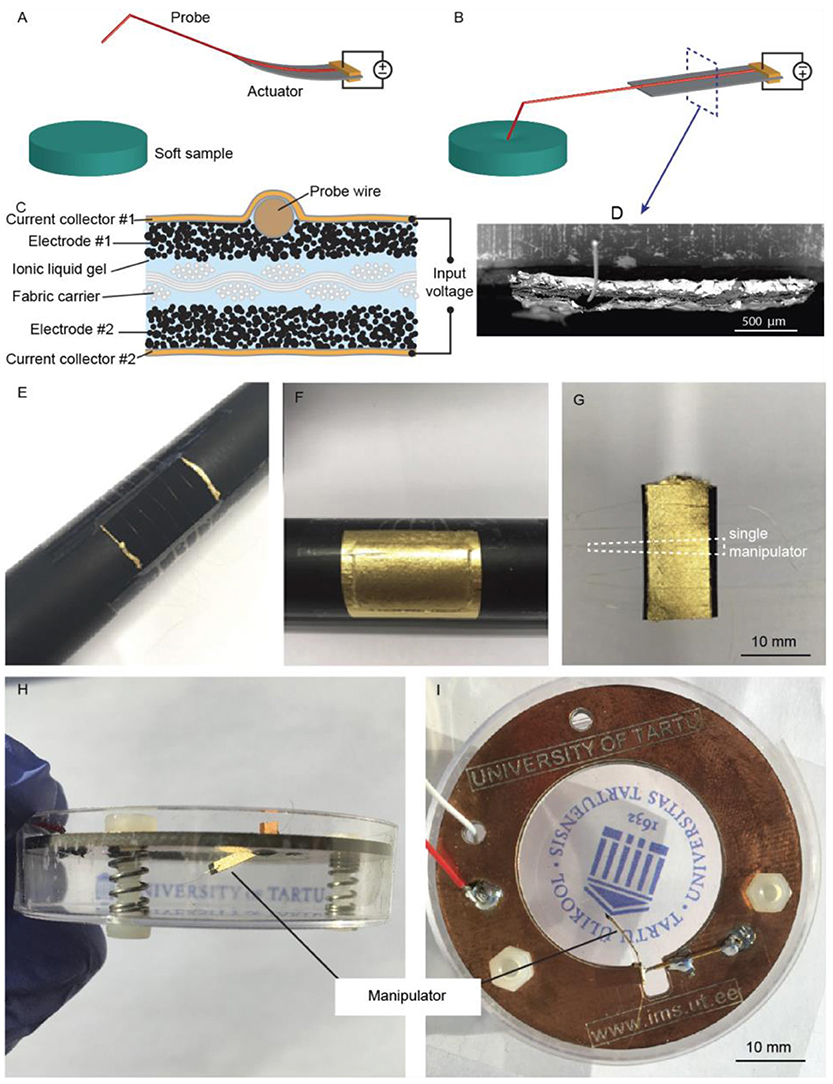 Giusto Manetti Battiloro Gold Leaf Manufacturers frontiers | ionic actuators as manipulators for microscopy