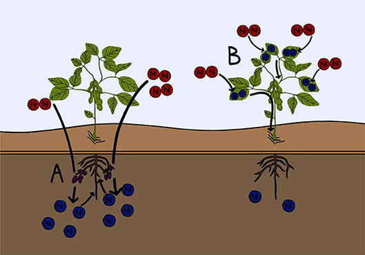 Figure 3 - Two examples of current research into improving fertilizer efficiency.