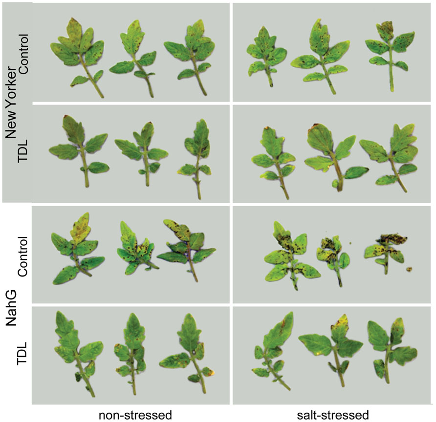 Frontiers | Induced resistance in tomato by SAR activators