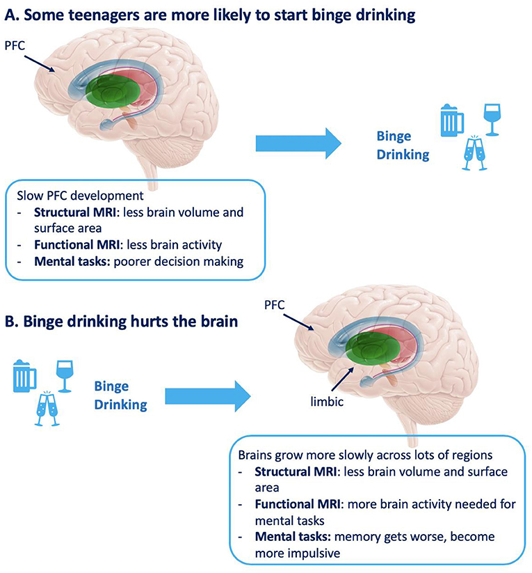 Figure 3 - (A) Differences in the brain that increase the likelihood of a teenager binge drinking.