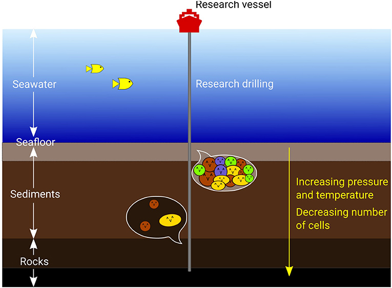 Figure 1 - Many microorganisms, shown here as colored circles and ovals, live under the seafloor.