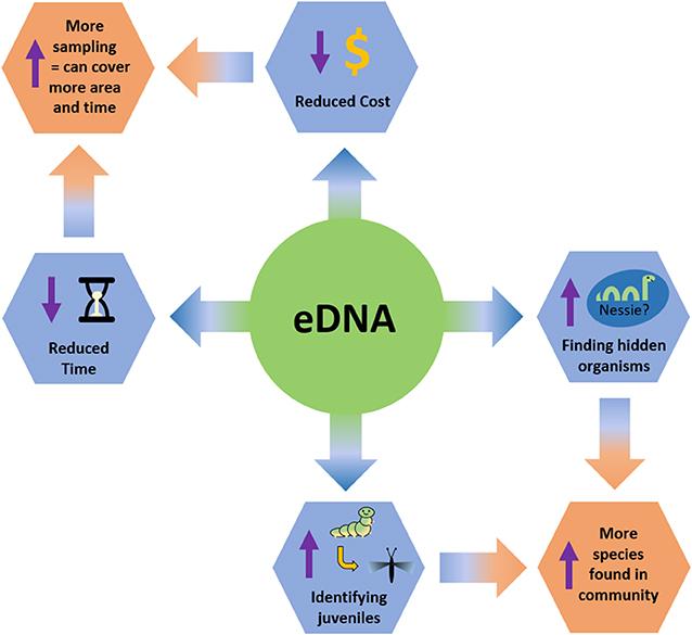 Figure 2 - Advantages of studying biodiversity using eDNA.