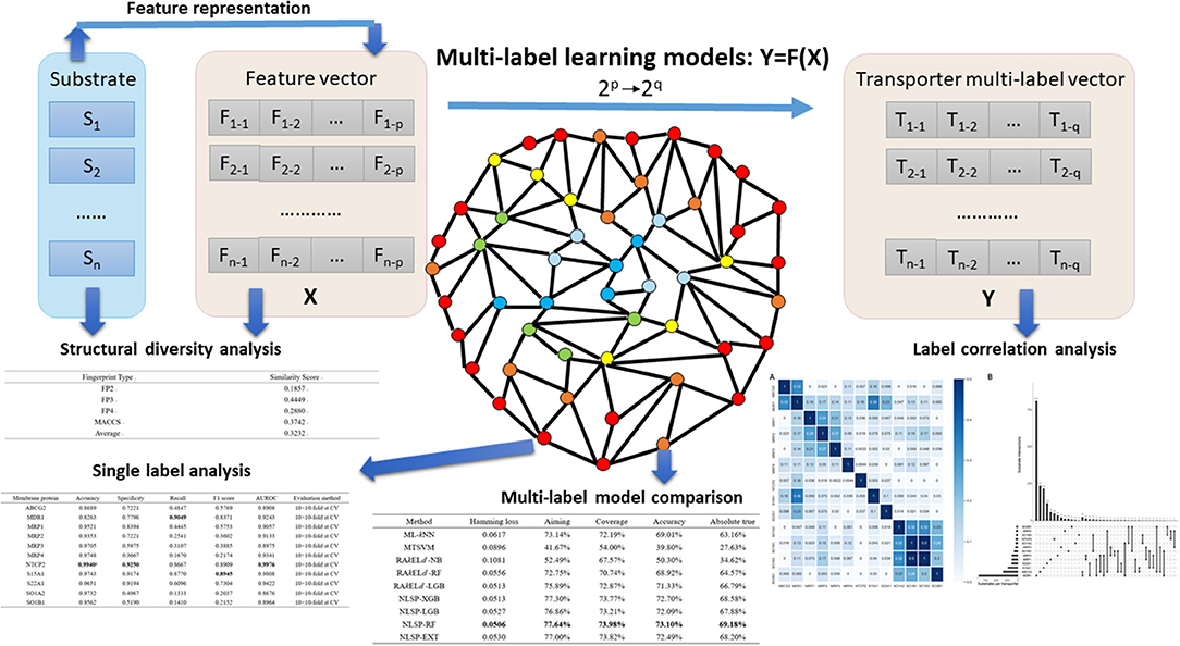 Frontiers | STS-NLSP: A Network-Based Label Space Partition