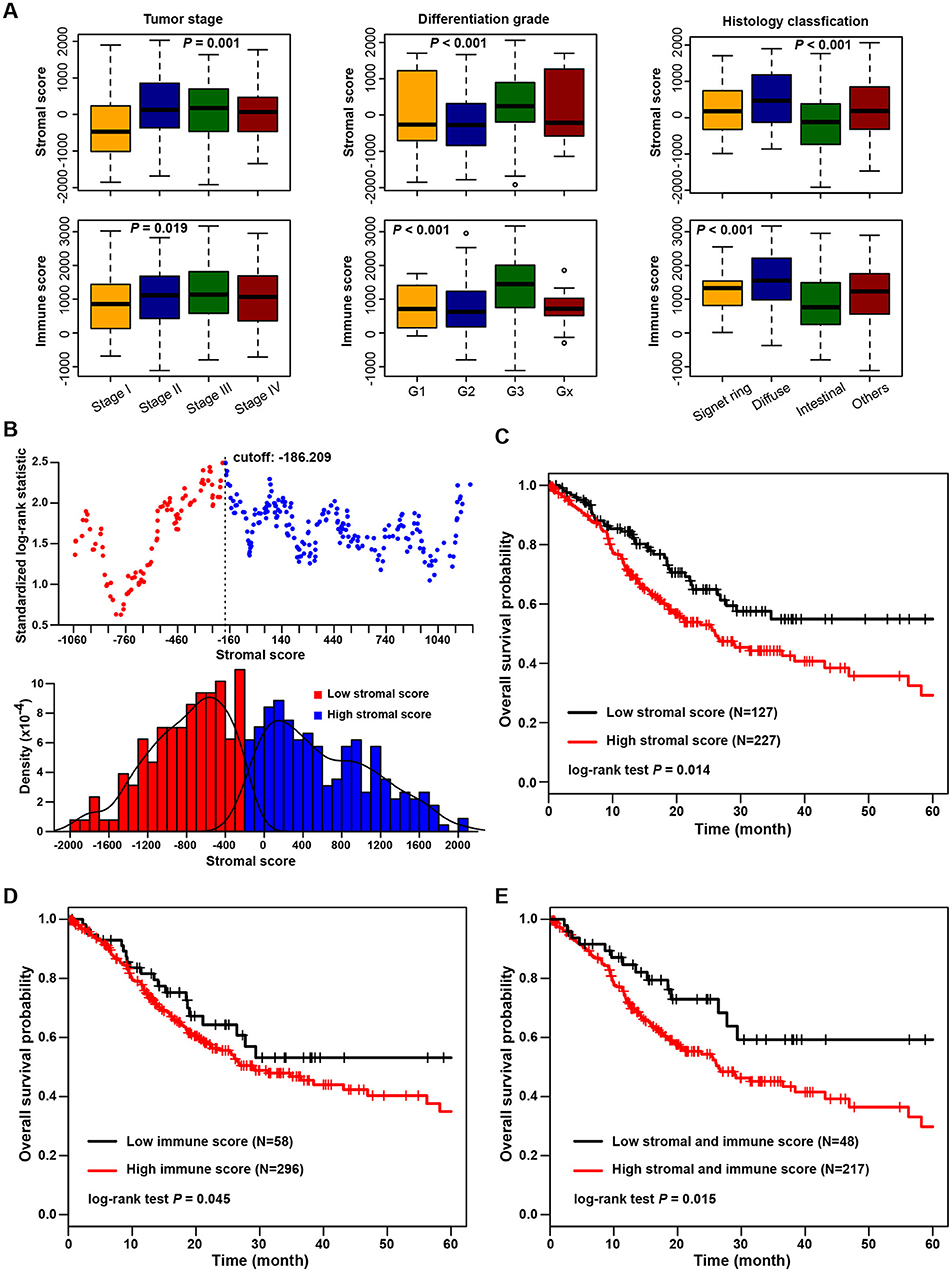 Frontiers Stromal Immune Score Based Gene Signature A Prognosis Stratification Tool In Gastric Cancer Oncology