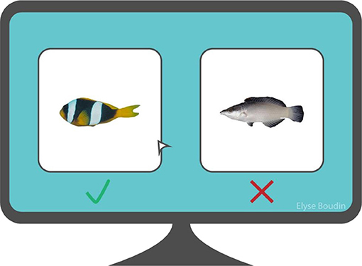 Figure 1 - Online survey to determine which fish people find more beautiful.