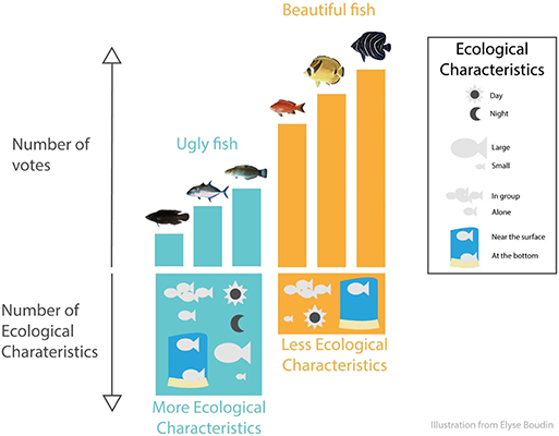 Figure 2 - How does the beauty of fish relate to their roles in the ecosystem?