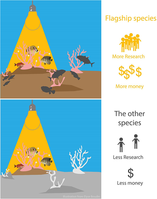 Figure 3 - Beautiful coral fish species can be flagship species, which attract more research and money away from other, less attractive fish species that are important for keeping coral reef ecosystems healthy.