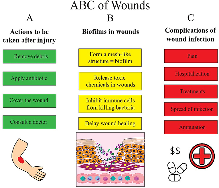 Figure 2 - This figures shows us the basic ABCs of wounds.