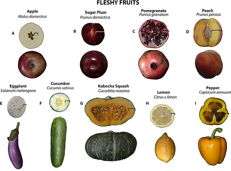 Figure 2 - Selected fleshy fruits, along with their Latin names:
