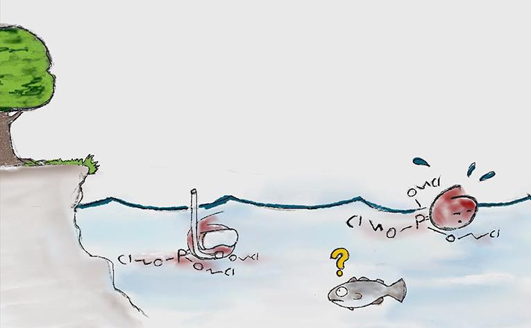"""شكل 2 - """"تسبح"""" إسترات الفوسفات العضوي (التي تحملها تيارات المياه) من مكان ما في الجنوب (حيث تم صنعها) باتجاه المنطقة القطبية الشمالية."""