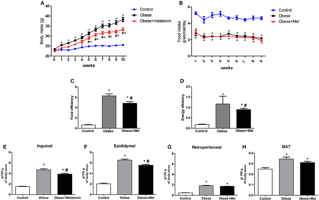 Frontiers Melatonin Supplementation Decreases Hypertrophic Obesity And Inflammation Induced By High Fat Diet In Mice Endocrinology