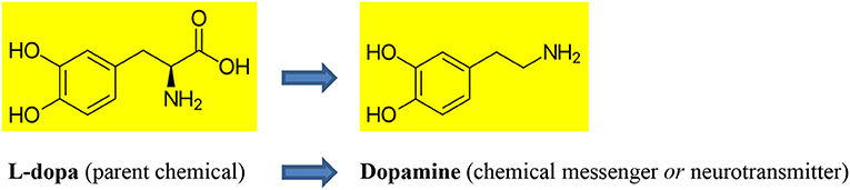 "Figure 2 - Dopamine is formed from its ""parent"" chemical, called L-dopa."