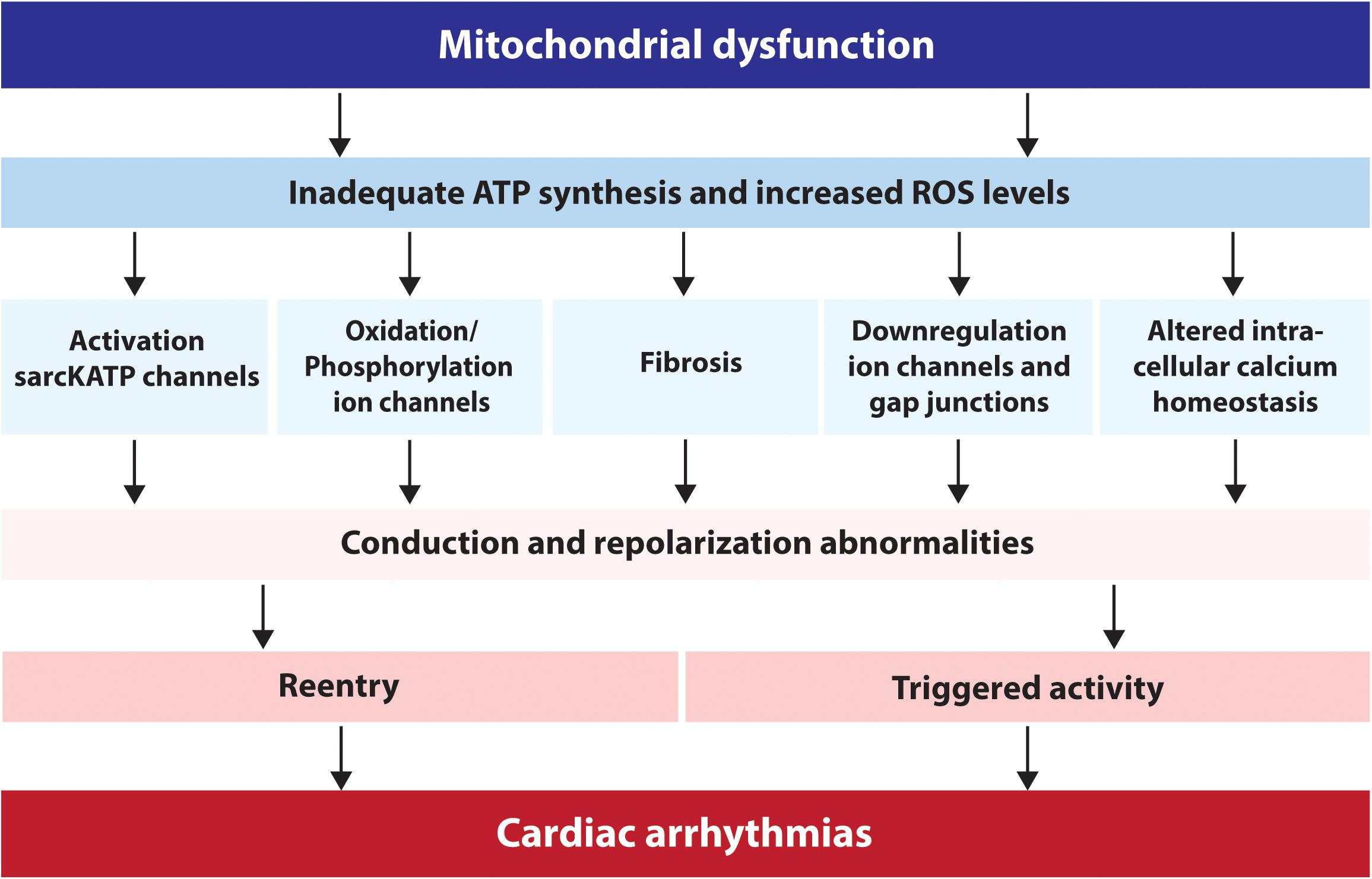 Rvs Tv Kast.Frontiers Mitochondrial Dysfunction As Substrate For