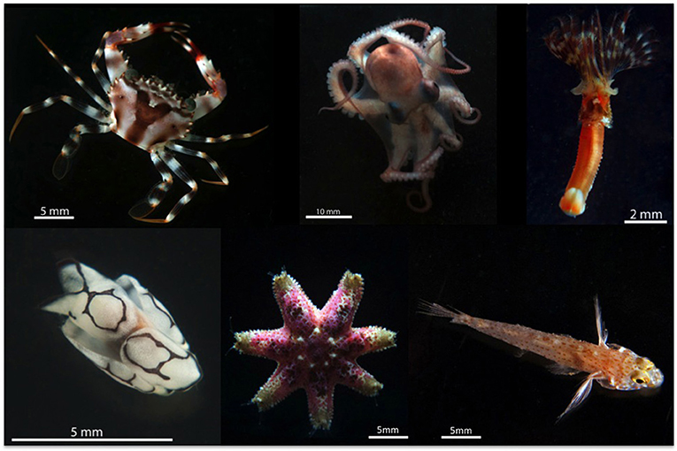 Figure 1 - Examples of animals living on coral reefs collected using ARMS in the Red Sea.