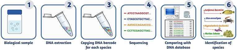 Figure 3 - Identification of organisms using eDNA barcoding.