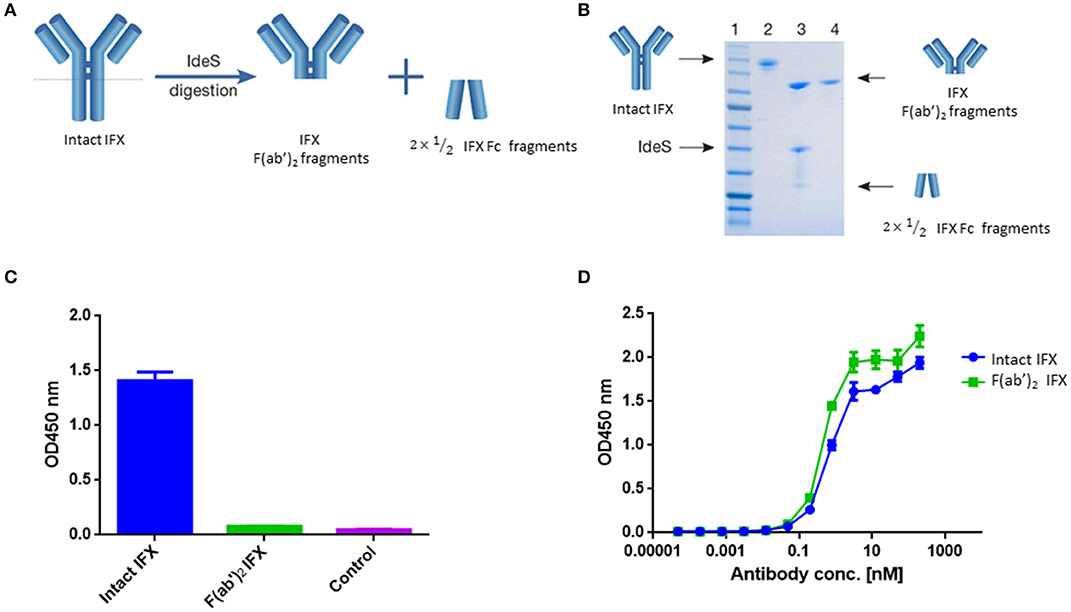 Frontiers Molecular Landscape Of Anti Drug Antibodies Reveals The Mechanism Immune Response Following Treatment With Tnfa Antagonists Immunology