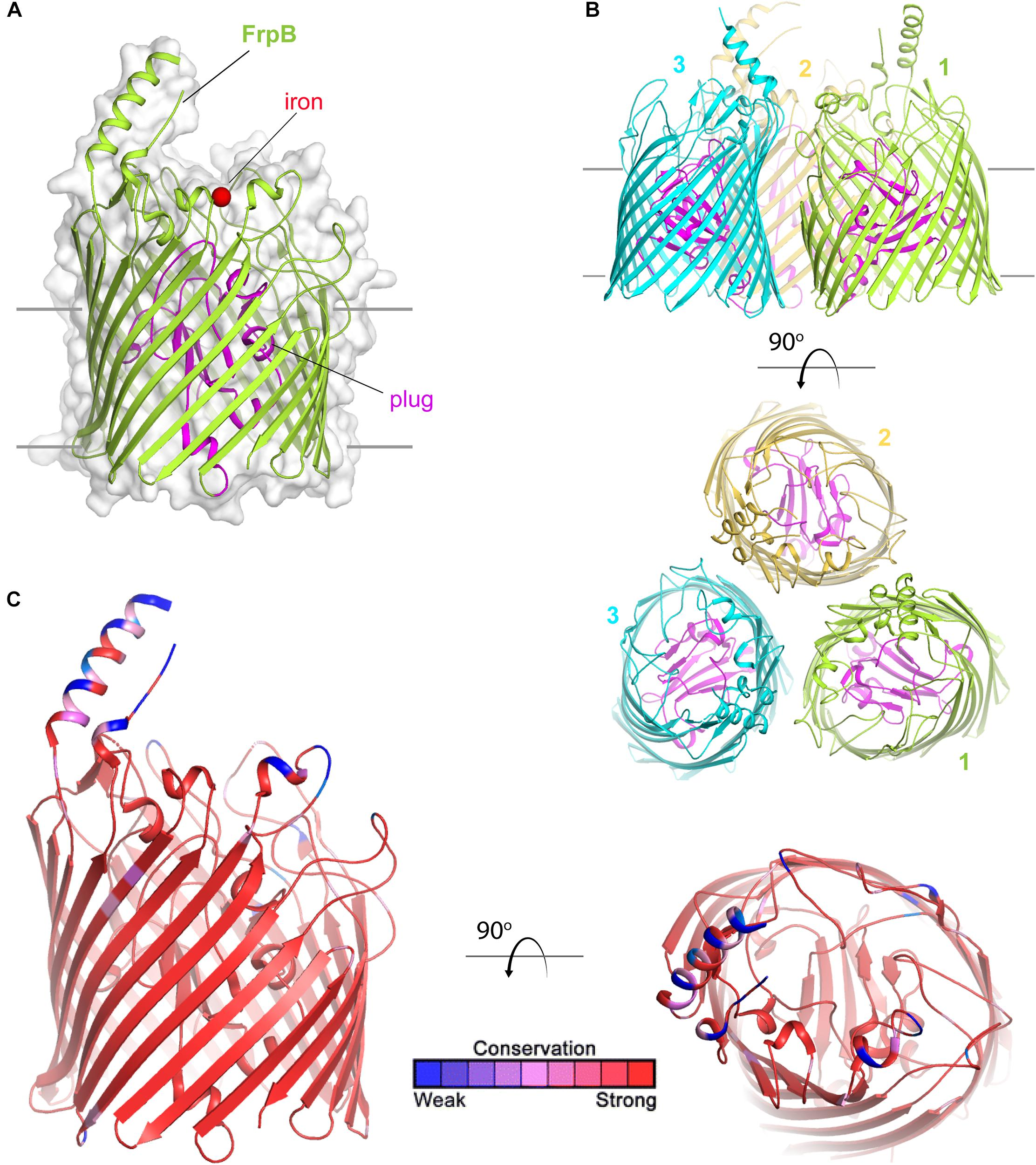 Structural Basis For Evasion Of Nutritional