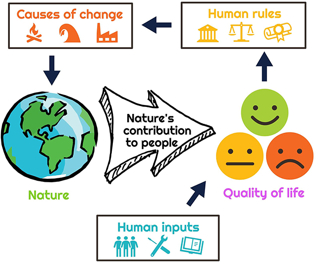 Figure 1 - The Conceptual Framework of nature's contribution to people by the Intergovernmental Science-Policy Platform on Biodiversity and Ecosystem Services (IPBES).