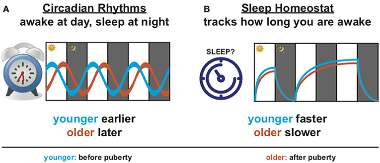 Figure 1 - Why do you sleep when you do?
