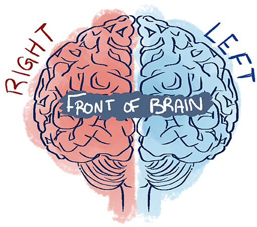 Figure 2 - This is a drawing of the two halves of the brain.