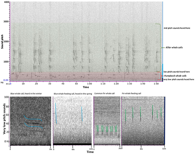 Figure 2 - Pictures of the sounds that the whales were heard making, showing the pitch range of the calls and how the pitch changed during the call.
