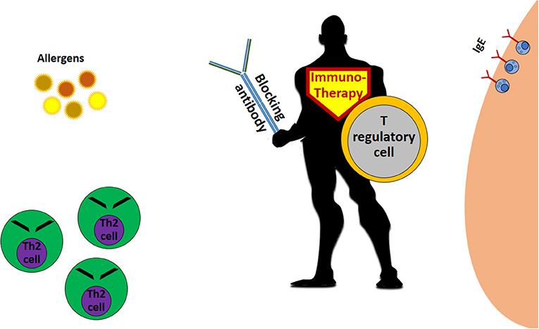 "Figure 2 - The allergy immunotherapy ""superhero."""