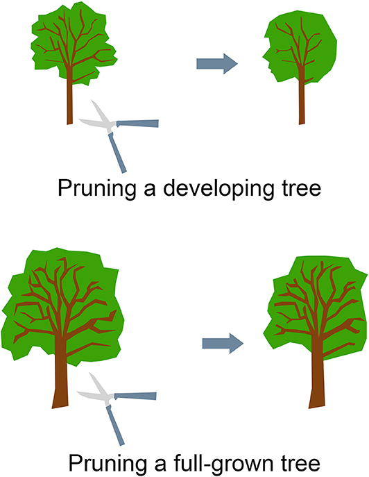 Figure 3 - Pruning a developing tree is easier than pruning a full-grown tree.
