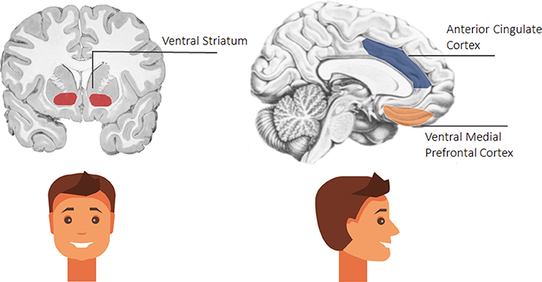 Figure 2 - The brain from the front (left) and from the side (right) of your head.
