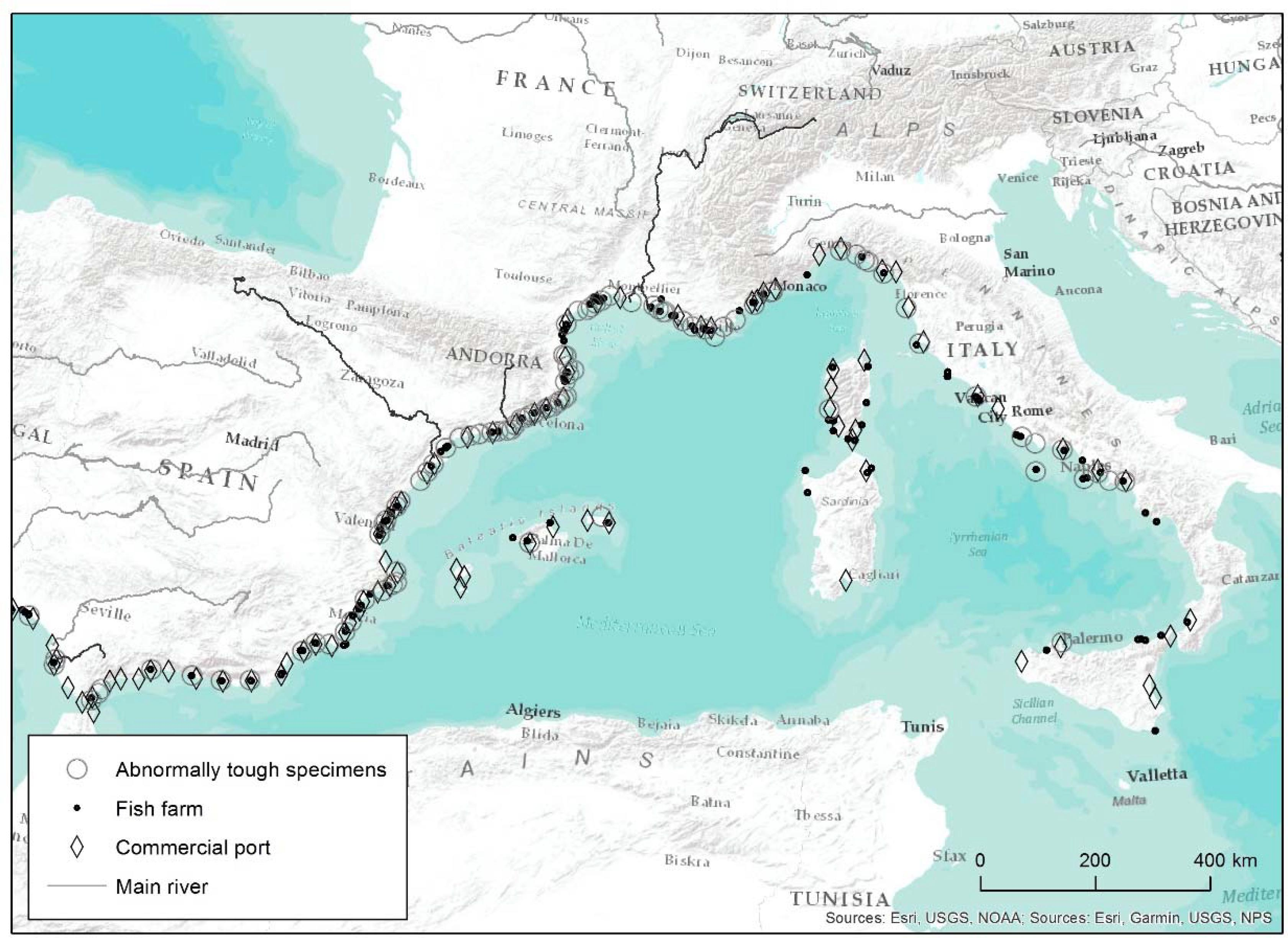 Frontiers | The Strange Case of Tough White Seabream (Diplodus sargus,  Teleostei: Sparidae): A First Approach to the Extent of the Phenomenon in  the Mediterranean | Marine Science