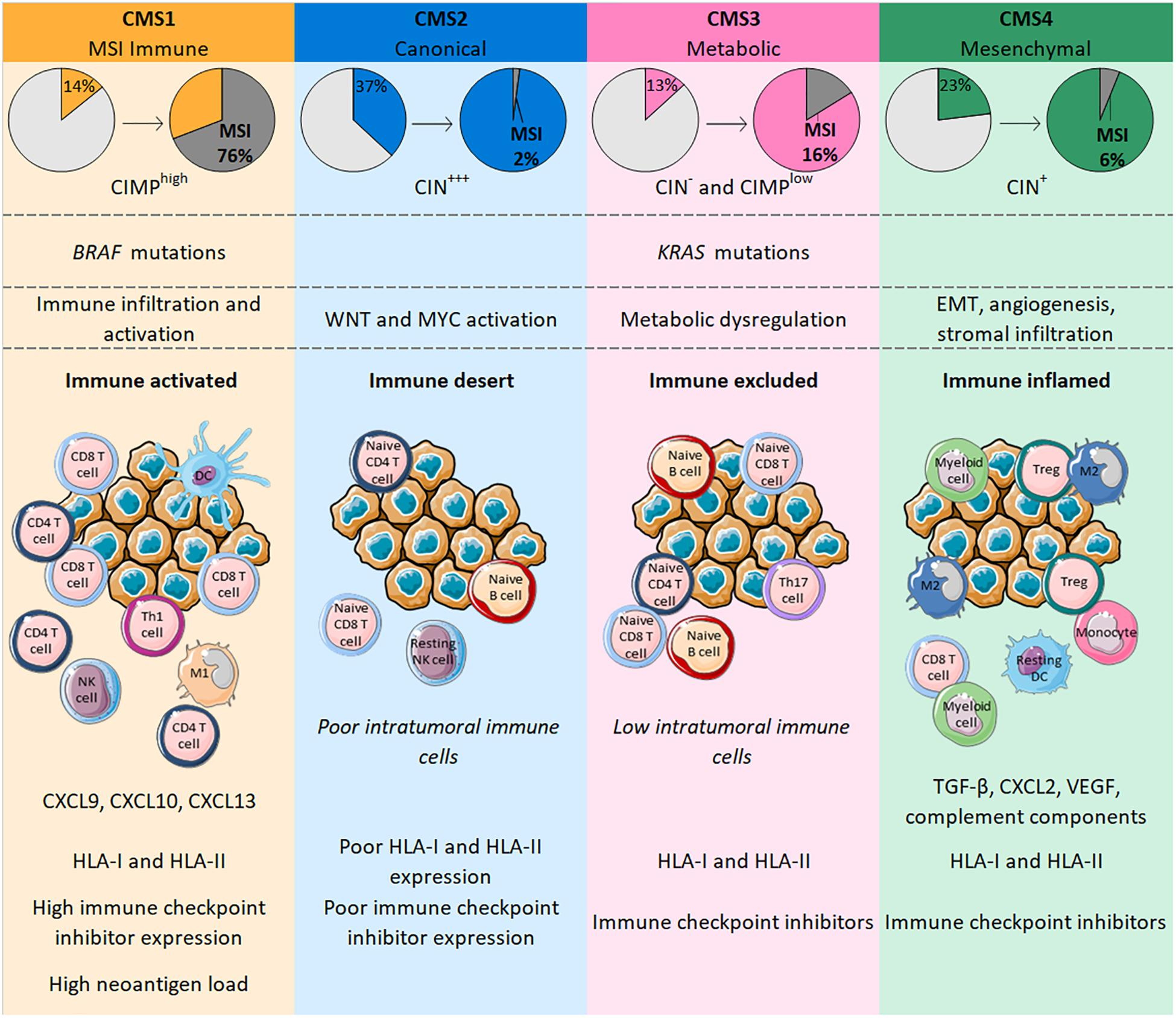 Frontiers Relationships Between Immune Landscapes Genetic Subtypes And Responses To Immunotherapy In Colorectal Cancer Immunology