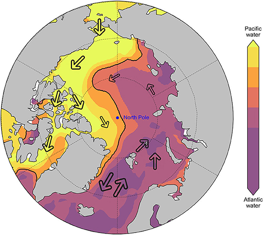 Figure 2 - Pacific seawater (yellow) and Atlantic seawater (purple) dominate certain areas of the Arctic Ocean.