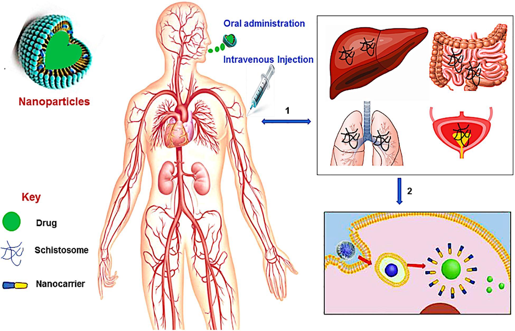 inflammerad galla symtom