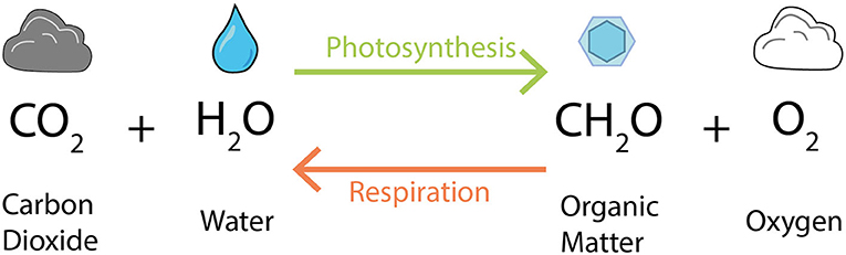 Figure 1 - Photosynthesisers, like phytoplankton, use sunlight to create organic matter, shown here as CH2O.