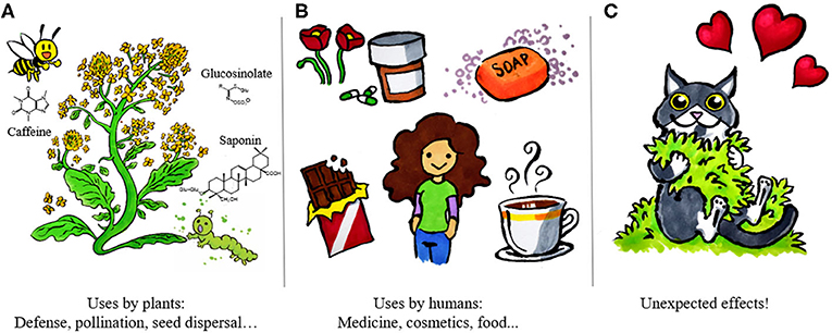 Figure 1 - Understanding how and why plants make specialized metabolites may help us develop new medicines and agricultural resources.