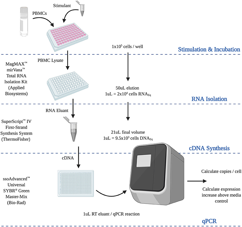 Frontiers An Analytically And Diagnostically Sensitive Rna Extraction And Rt Qpcr Protocol For Peripheral Blood Mononuclear Cells Immunology