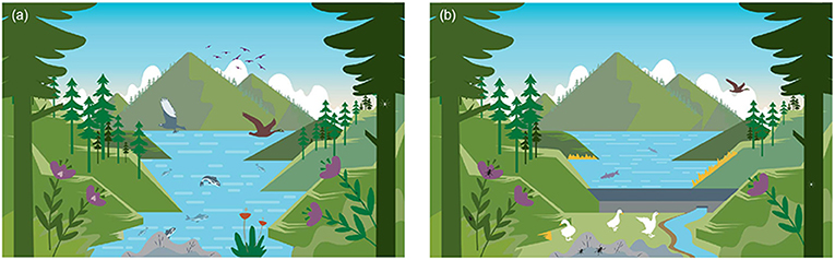 Figure 2 - Plant, insect, and animal species change when a lake (A) is converted into a reservoir (B) by building a dam.
