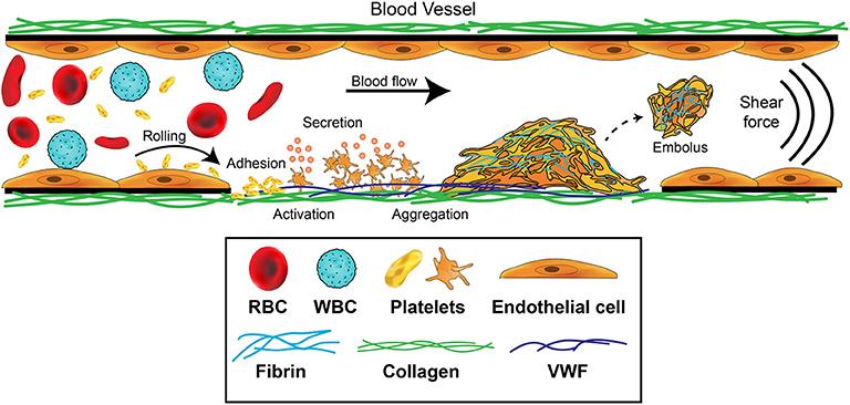 bacteria viral no sangue