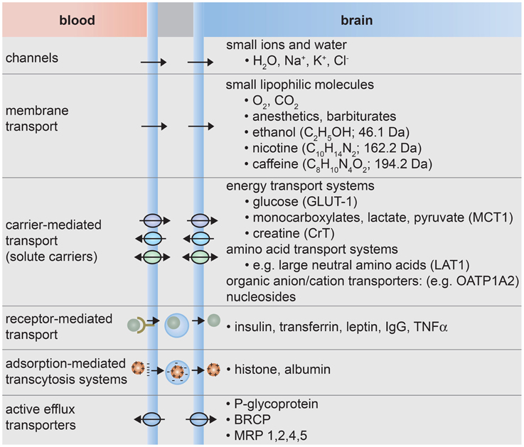 Frontiers The Blood Brain Barrier An Engineering
