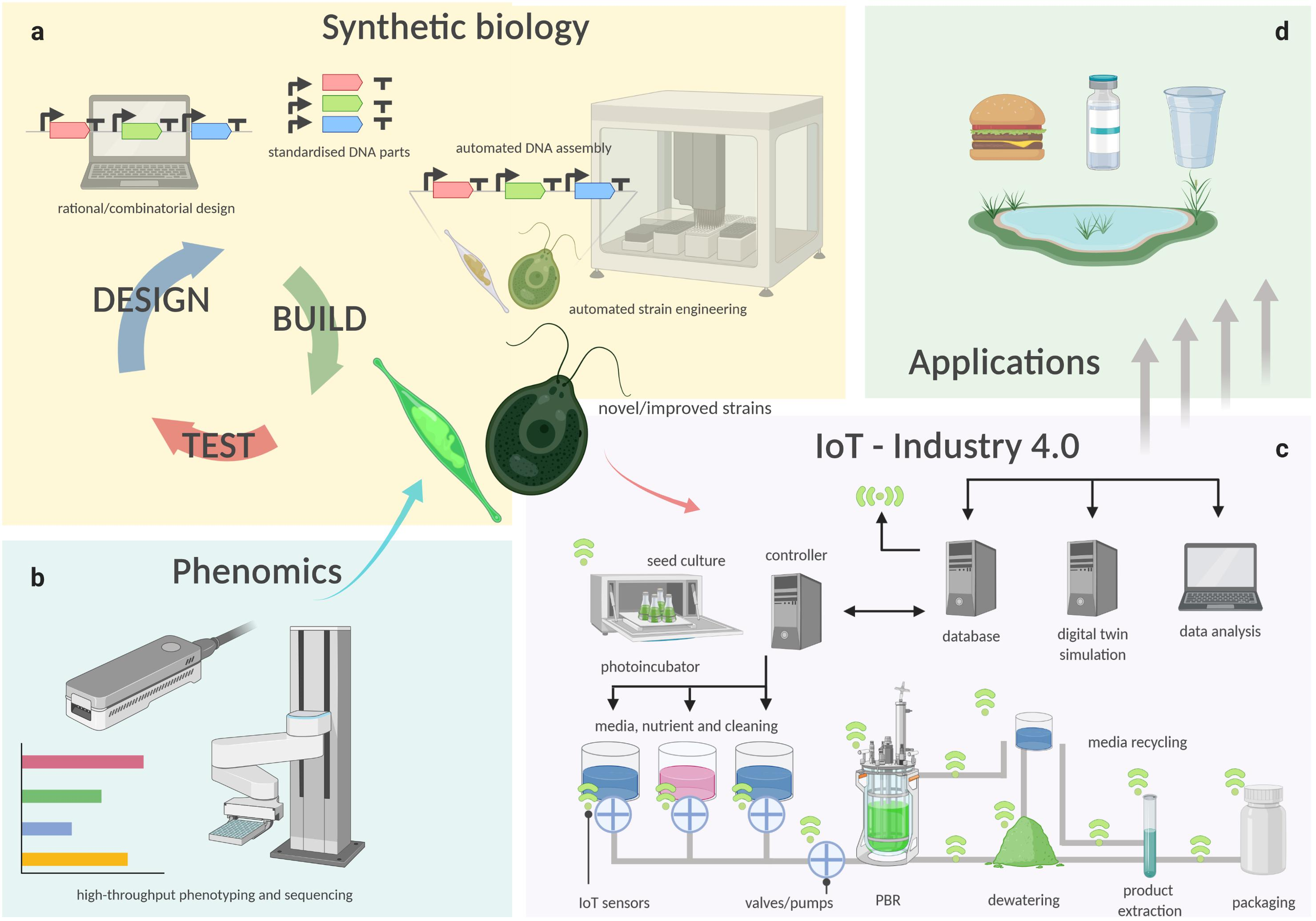 Frontiers Emerging Technologies In Algal Biotechnology Toward The Establishment Of A Sustainable Algae Based Bioeconomy Plant Science