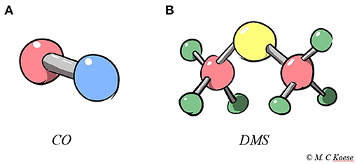 Figure 2 - (A) Carbon monoxide (CO) and (B) dimethyl sulfide (DMS).