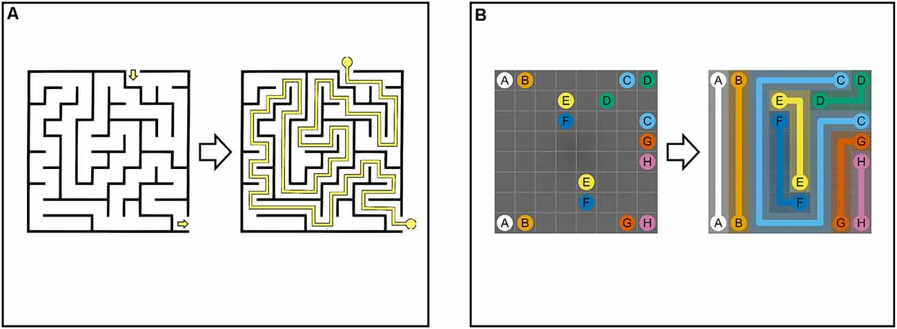 Frontiers Development And Evaluation Of Maze Like Puzzle Games To Assess Cognitive And Motor Function In Aging And Neurodegenerative Diseases Frontiers In Aging Neuroscience