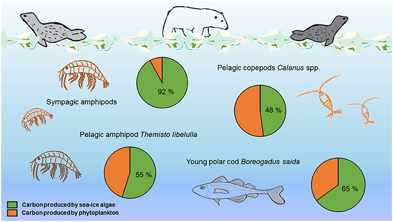 Figure 3 - Maximum percentage of carbon produced by sea-ice algae in the bodies of various Arctic animals.