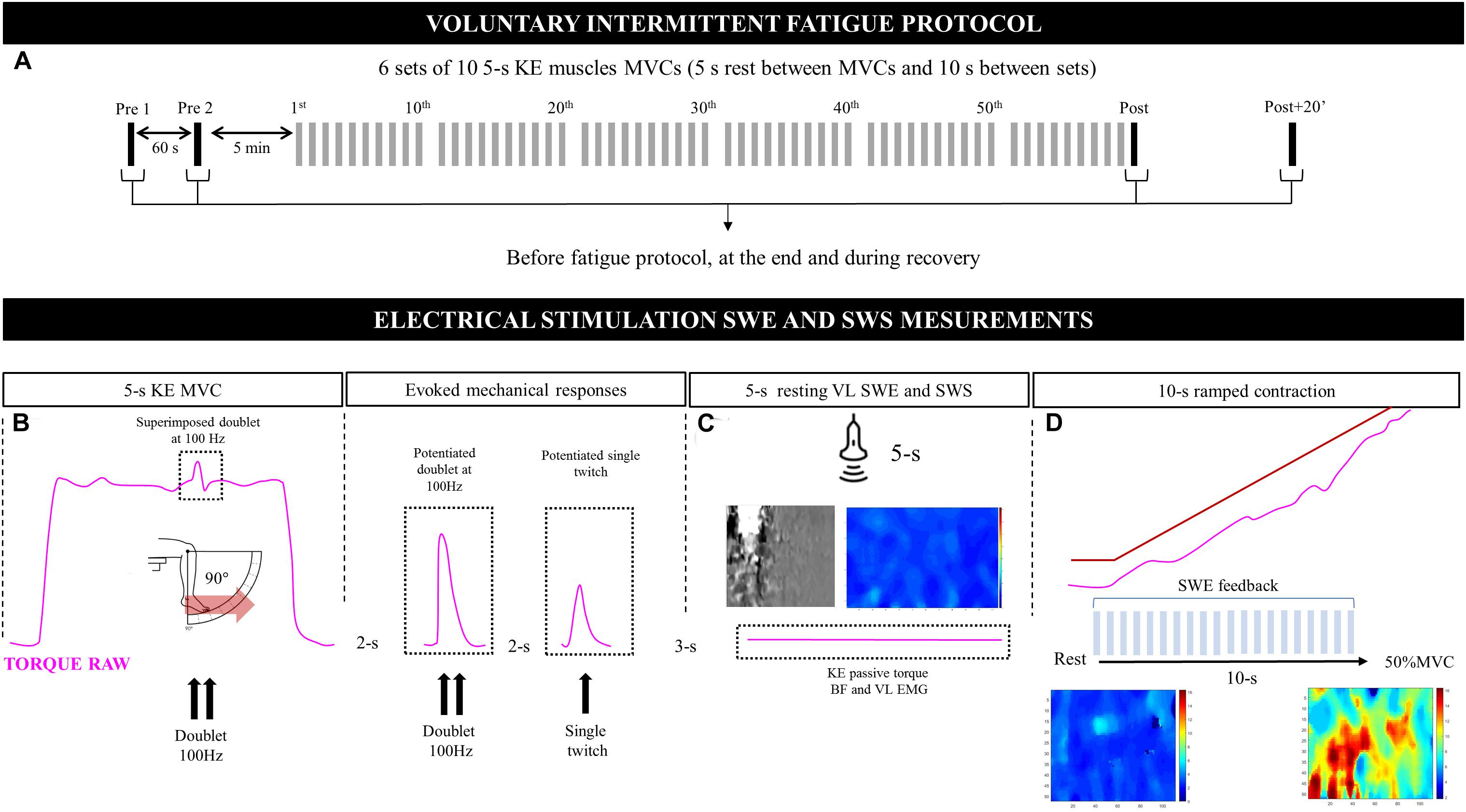 Frontiers | Changes in the Viscoelastic Properties of the Vastus Lateralis  Muscle With Fatigue | Physiology